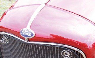 32 Radiator Shell Ornament-Bull Nose